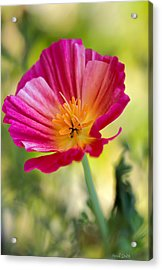 Delightful Acrylic Print by Heidi Smith