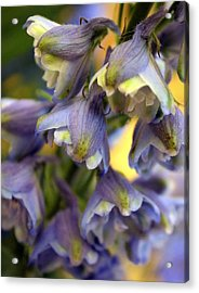Delphinium Blue Acrylic Print