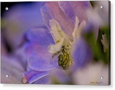 Acrylic Print featuring the photograph Delphinium by Kathy Ponce