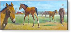 Acrylic Print featuring the painting Delval Horse Farm In Spring by Oz Freedgood