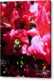 Acrylic Print featuring the photograph Delving Into Sweetness by Robyn King