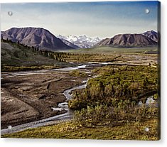 Denali Toklat River Acrylic Print by Penny Lisowski