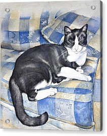 Acrylic Print featuring the painting Denise's Cat by Sandra Phryce-Jones