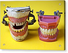 Dental Models Acrylic Print