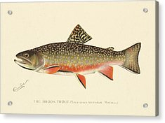 Denton Brook Trout Acrylic Print by Gary Grayson
