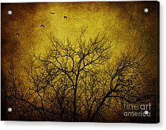 Departed Acrylic Print by Andrew Paranavitana