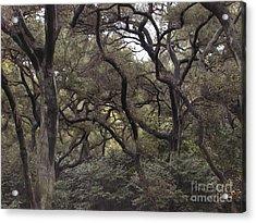 Descanso Oaks 3 Acrylic Print