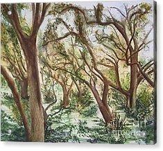 Descanso Oaks Acrylic Print