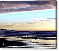 Descendants As Many As The Sand On The Shore Of The Sea Acrylic Print by Sharon Soberon