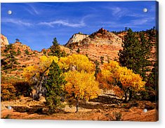 Acrylic Print featuring the photograph Desert Autumn by Greg Norrell