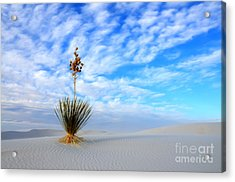 Desert Beauty White Sands New Mexico Acrylic Print by Bob Christopher