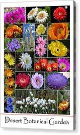 Desert Botanical Garden Acrylic Print