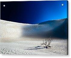 Desert Branch Void Acrylic Print