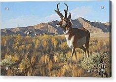 Desert Buck Acrylic Print