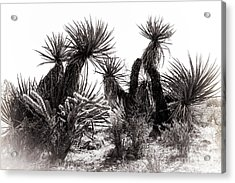 Desert Cactus Acrylic Print