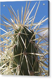 Desert Cactus Acrylic Print by Jewels Blake Hamrick
