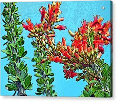 Desert Coral Acrylic Print by Louis Nugent