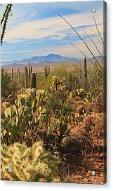 Acrylic Print featuring the photograph Desert Day by Alicia Knust