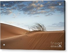 Desert Detail Acrylic Print