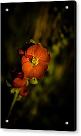 Acrylic Print featuring the photograph Desert Flower 2 by Joel Loftus