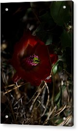Acrylic Print featuring the photograph Desert Flower by Joel Loftus