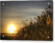 Desert Grain Acrylic Print