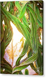 Desert Heat Acrylic Print by Roselynne Broussard