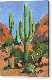 Desert Morning Saguaro Acrylic Print by Diane McClary