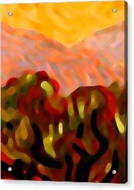 Desert Olive Trees Acrylic Print by Amy Vangsgard