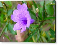 Desert Petunia Flower Acrylic Print