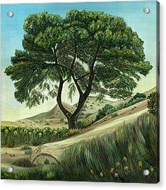 Desert Pine Acrylic Print
