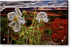 Desert Primrose 2 Acrylic Print