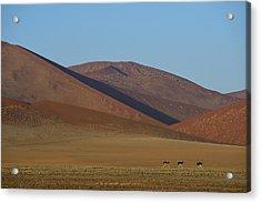 Desert Running Acrylic Print by Tony Beck