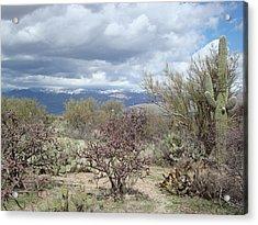 Desert Scene Acrylic Print