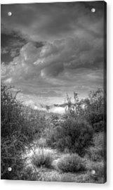 Desert Scrub Acrylic Print