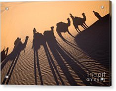 Desert Shadows Acrylic Print