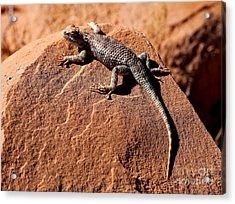 Desert Spiny Lizard Acrylic Print by Marty Fancy