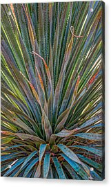 Acrylic Print featuring the photograph Desert Spoon by Beverly Parks