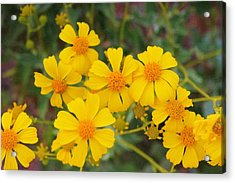 Acrylic Print featuring the photograph Desert Spring by David Rizzo