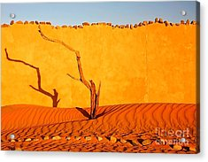 Namibia Desert Still Life Acrylic Print