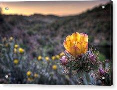Desert Sunset Blossom Acrylic Print by Anthony Citro