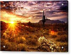 Desert Sunshine  Acrylic Print