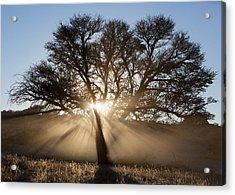 Desert Tree Acrylic Print by Max Waugh
