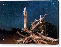 Desert Tree Under The Stars Acrylic Print by Michael J Bauer