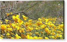 Desert Wild Flowers Acrylic Print