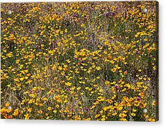 Desert Wildflowers Acrylic Print by Robert Ashbaugh