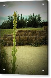 Acrylic Print featuring the photograph Deserted by Diane Miller