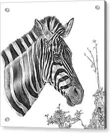 Designer Stripes Acrylic Print