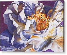 Desirea Acrylic Print