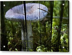 Destroying Angel Acrylic Print by Nathan Wright